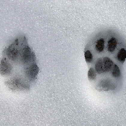 animaux hiver traces