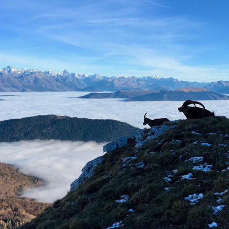 faune et paysages d'altitude